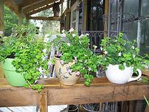 planters small.jpg