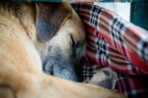 Dog sleeping in India