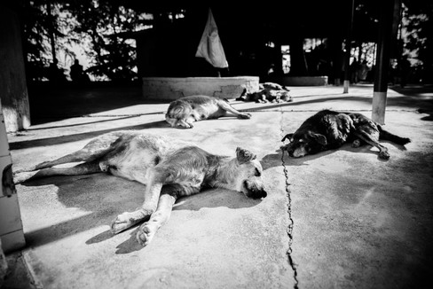 Stray dogs sleeping in India