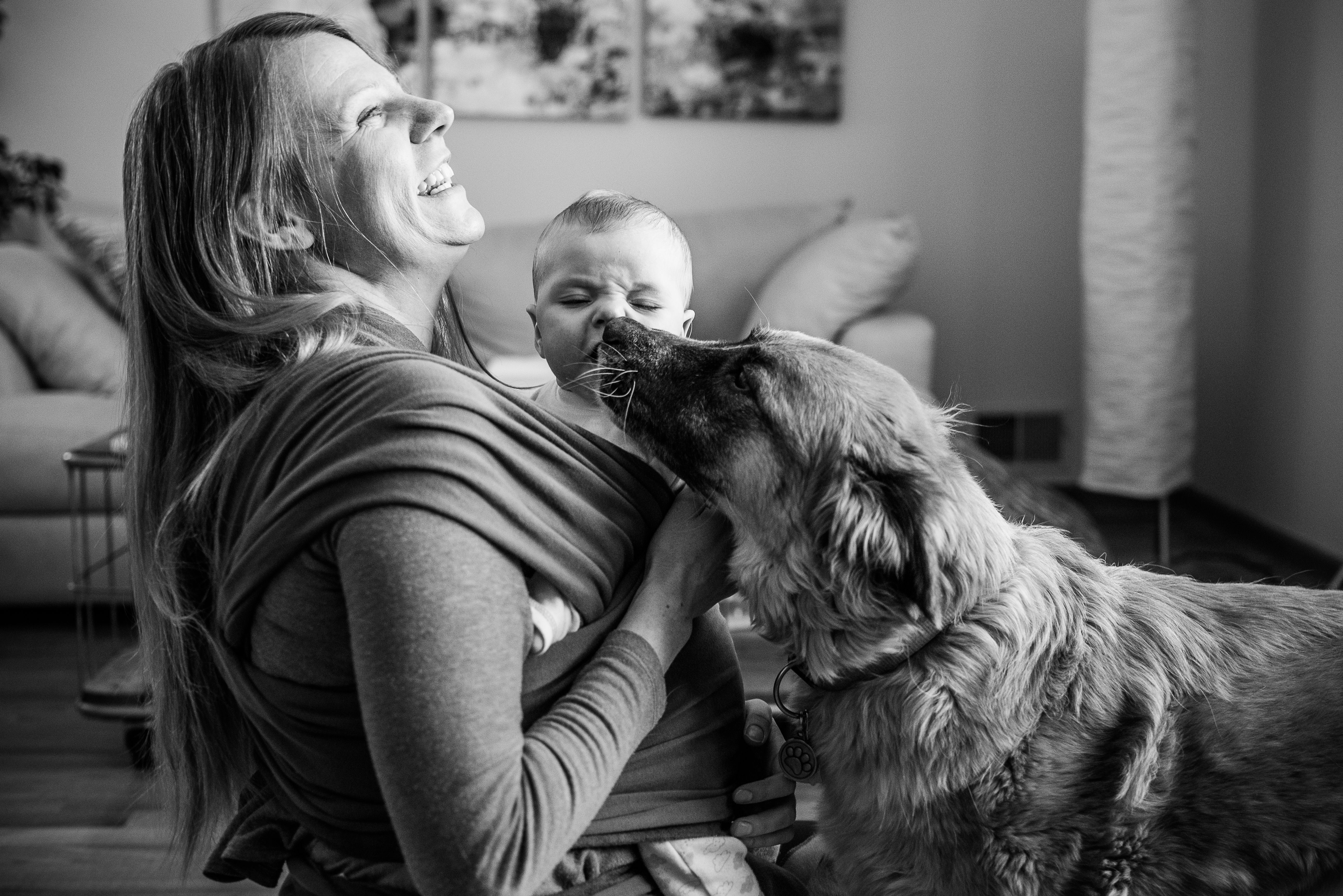 Dog licks baby and mom laughs