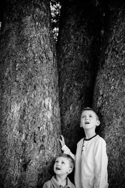 Boy looking up in tree