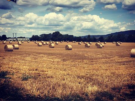 Birchmore Consulting farm.jpg