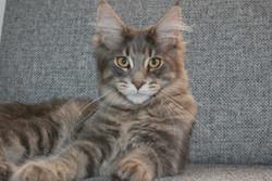 Baxter 23 uger*weeks