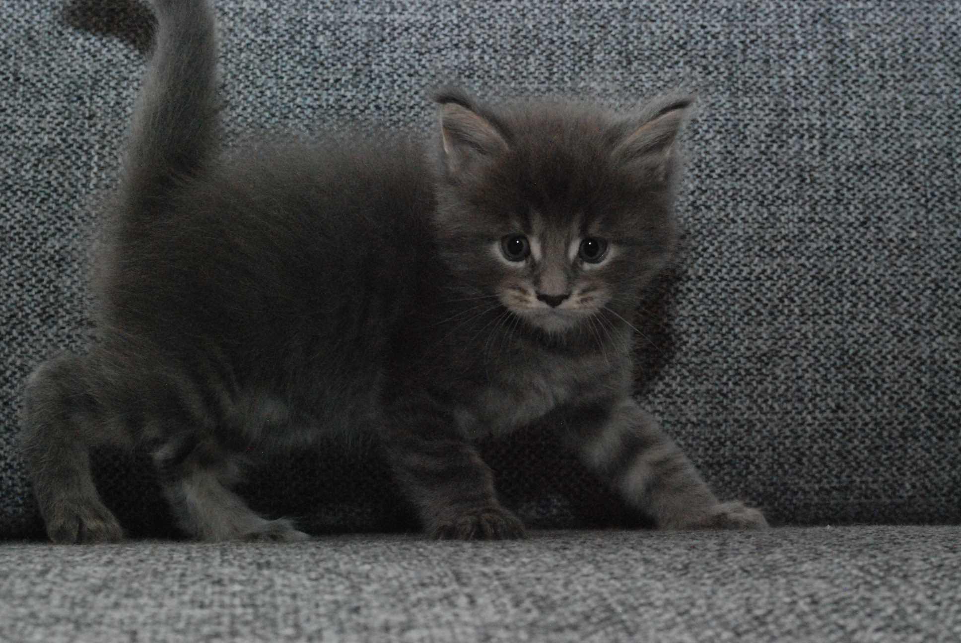 Baxter 5 uger*weeks