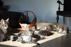Killinger i solen