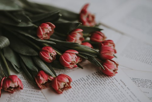 Red tulips laying across the pages of an open book