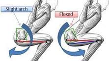 כאבים עקב ליקוי היציבה ותופעת(Gripping) אחיזת ישבן