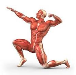 התמקדות בשריר-תנועה