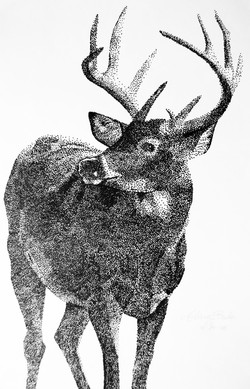 Deer - Bula.jpg
