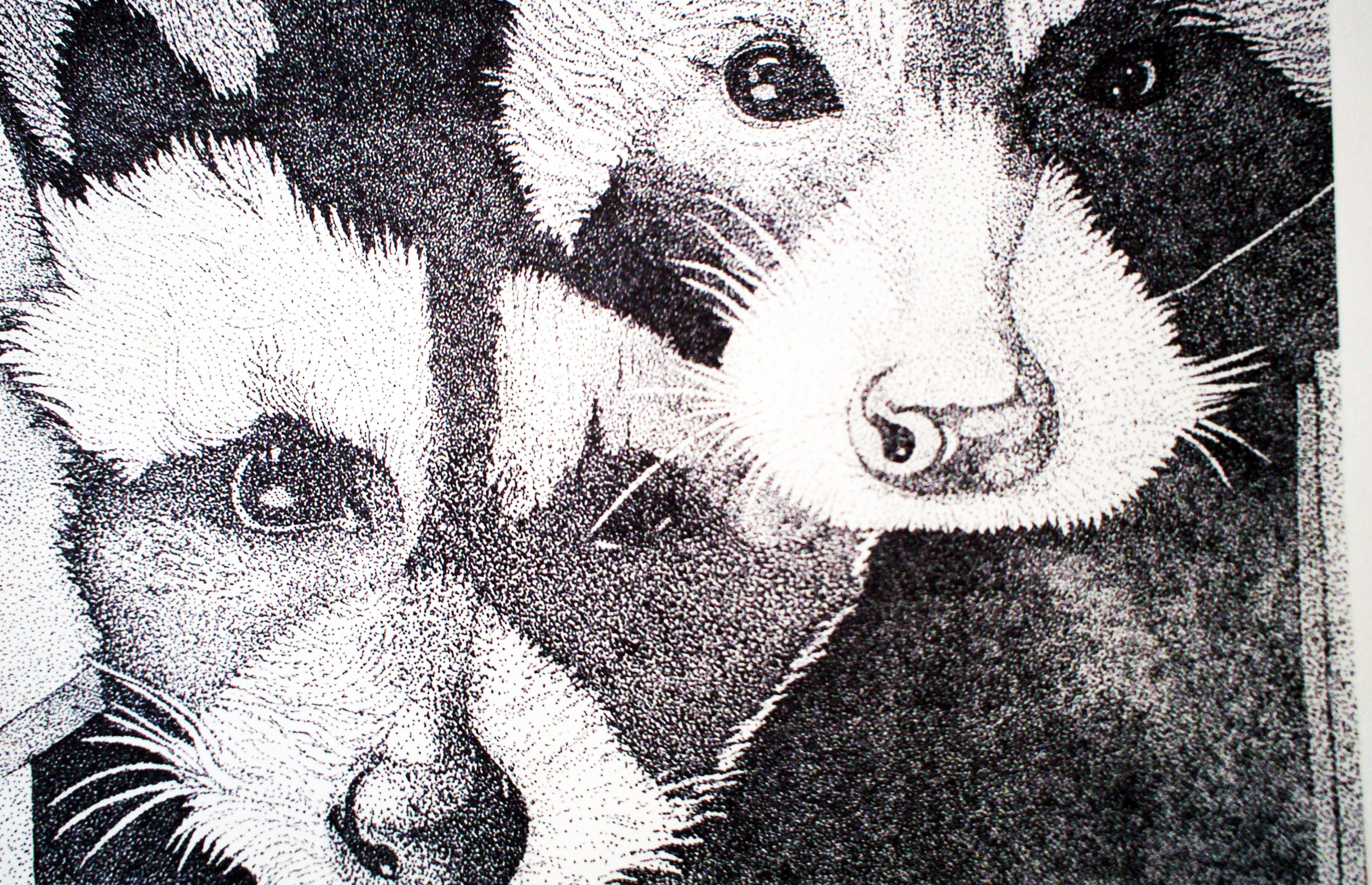 Drawing 1 Pointillism Racoons.jpg