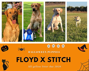 Floyd x Stitch.jpg