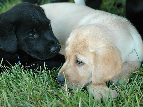 Puppy Group membership