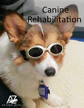 Canine-Rehab-Logo-1.png
