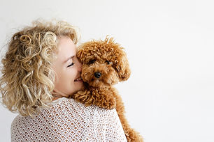 Adorable toy poodle puppy in arms of its