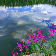Colorful reflections.jpg