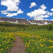Trail Less Travelled.jpg
