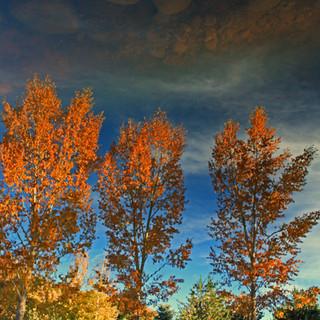Reflections at the botanic park