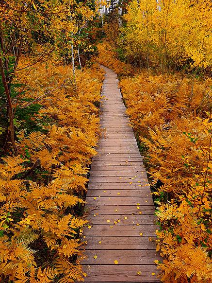 Fall Wanderings.jpg