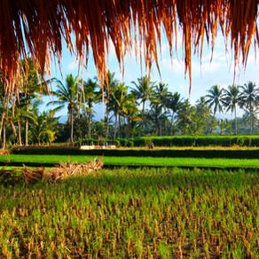 Lombok en déconnexion