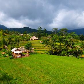 Sidemen à Bali, mon rêve vert 💚