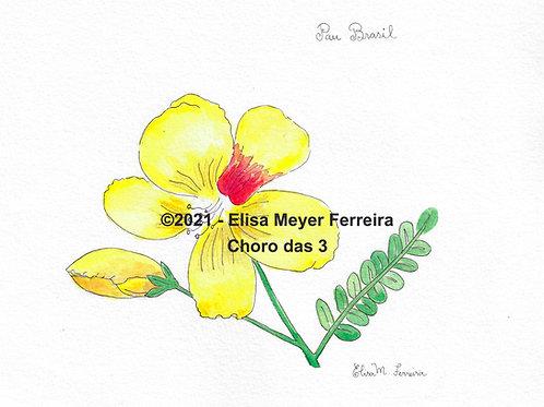 Reprodução: Flor de Pau Brasil