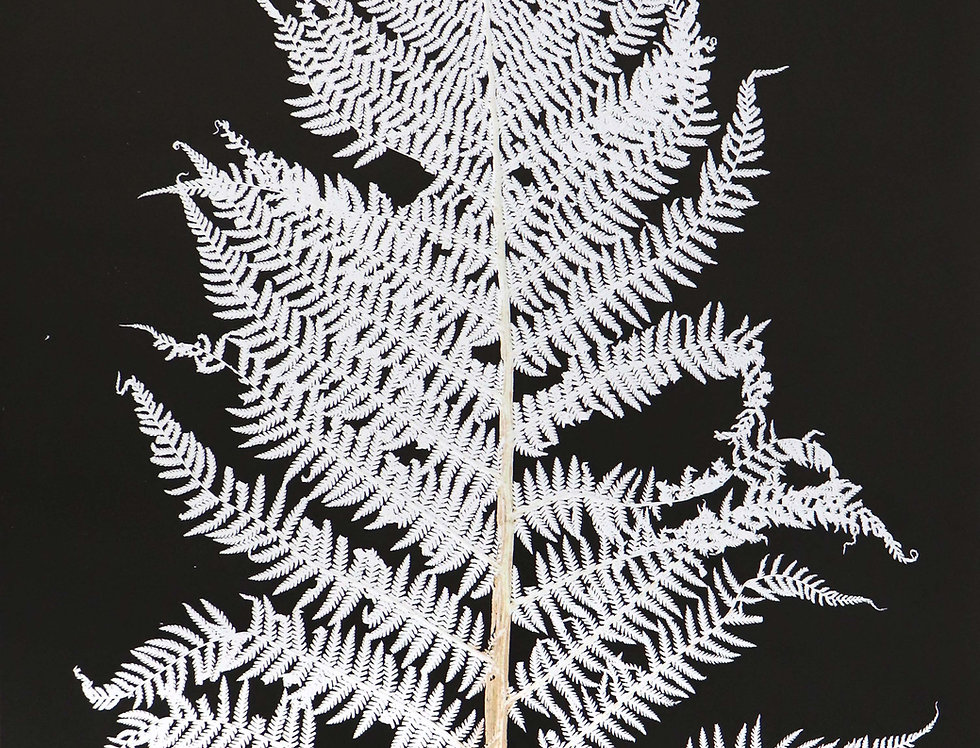 Bracken Fern - Medium