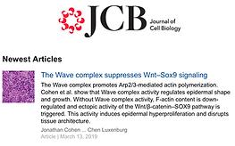 JCB screen cohen et al.png