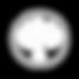ACCUEIL VIDEOS 'SOFT FOCUS' de C.JARECKI