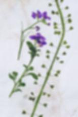 herbier banal02.jpg