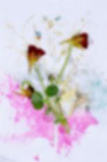 herbier banal01.jpg