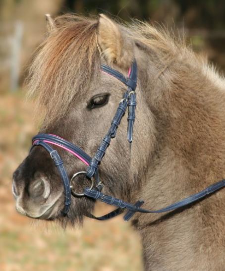 Bridon Unicorn 2