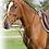 Thumbnail: Collier de Chasse QHP