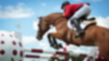 Equestrian Sports, Horse jumping, Show J