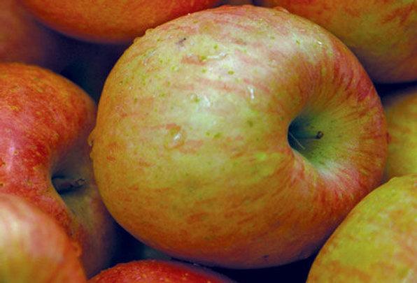 Battleford Apple