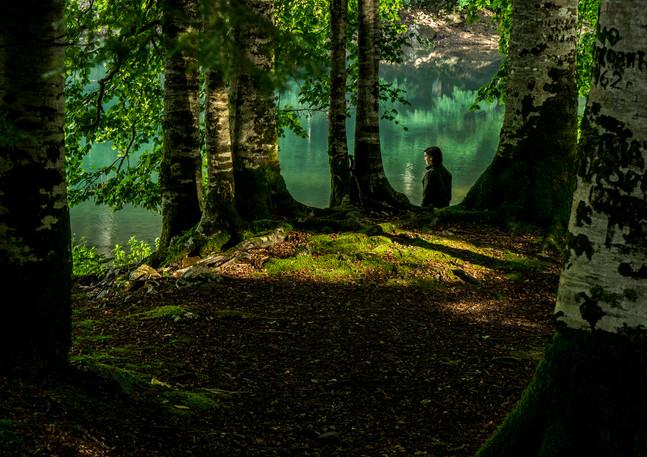 רגע מכריע בין עצי היער במונטנגרו