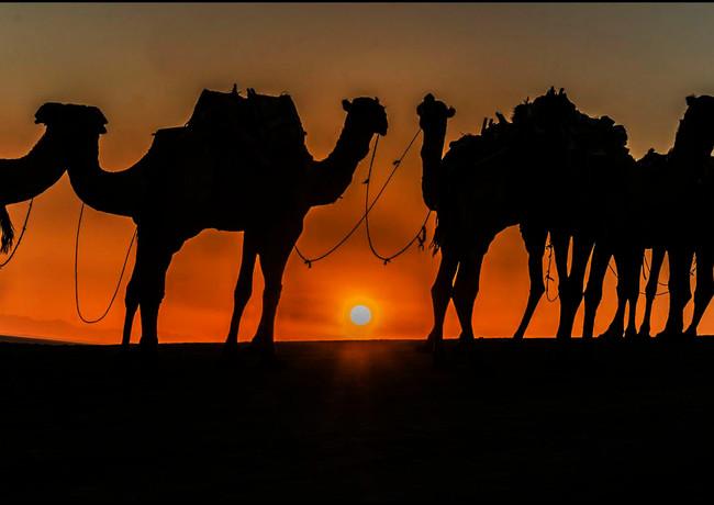 שיירה עם שחר באתיופיה