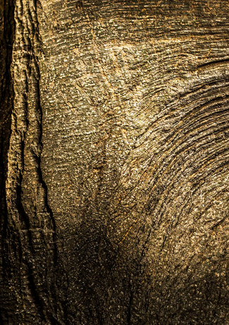 """""""כי האדם עץ השדה"""""""