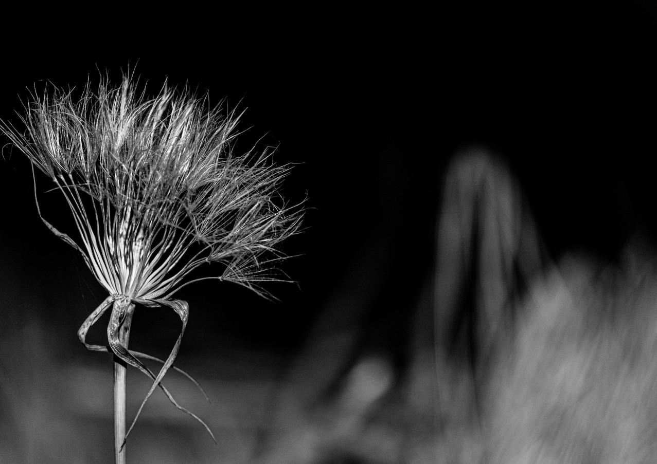 הפרח המרקד בחורשה בכרמל