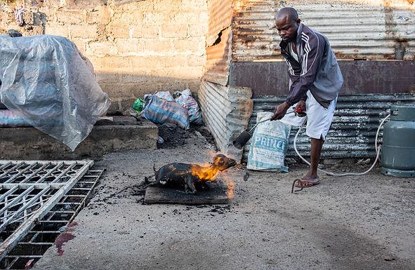 אומללות קשה לצפייה בגאנה