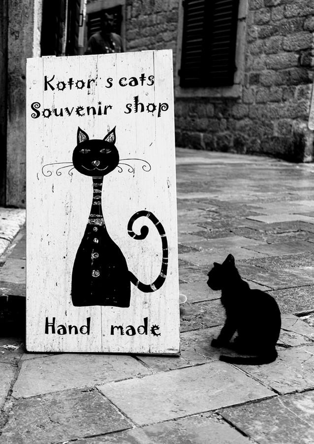 חתוליים במונטנגרו