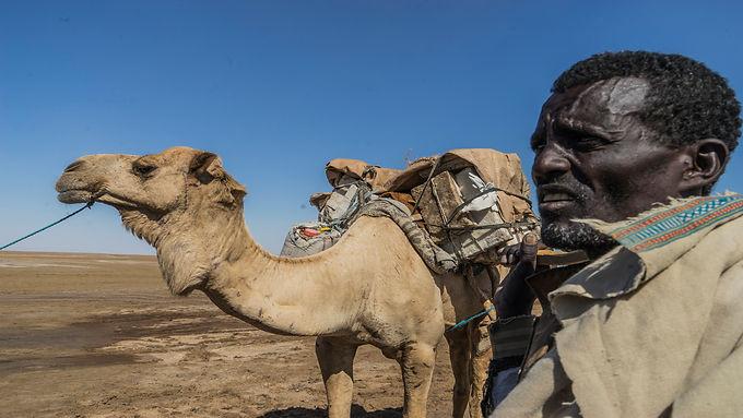 איש וגמלו במדבר דנקיל הלוהט באתיופיה