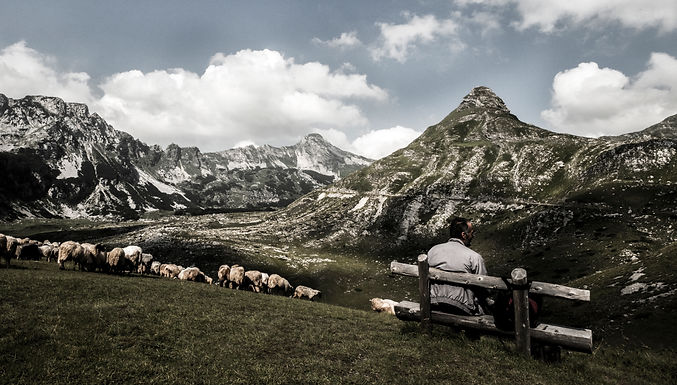 כבשים ועננים