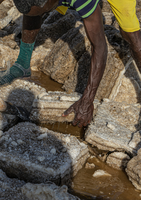 כל כך חם וכל כך כבדים גושי המלח במדבר דנקיל  באתיופיה