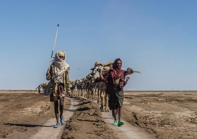 שיירת הגמלים שנושאים על גבם גושי מלח כבדים. הם  צועדים  להם במדבר הלוהט באתיופיה אל העיר הגדולה כדי למכור את גושי המלח