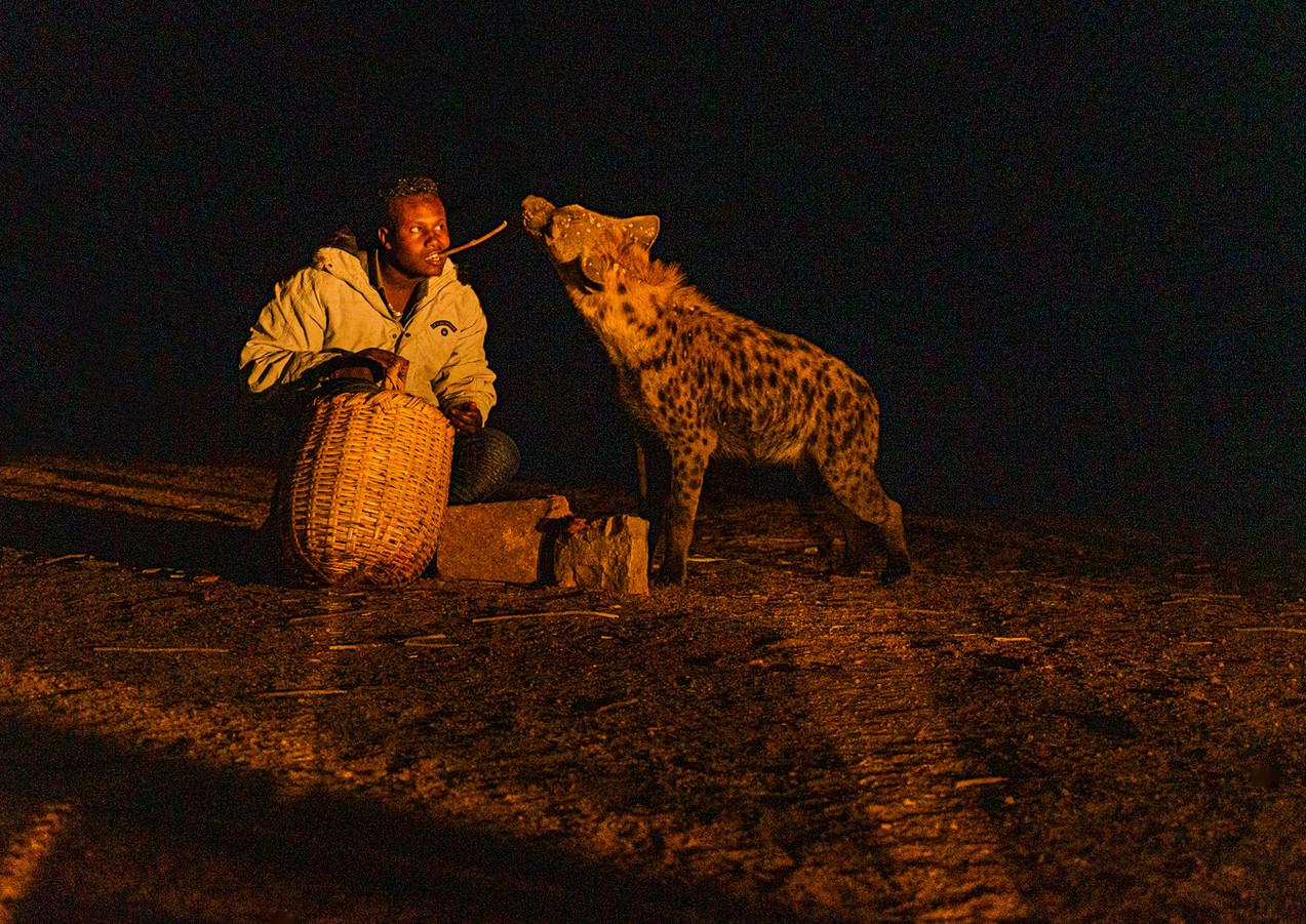 האכלת צבועים בבשר נא כדי שישבעו ולא יטרפו את בני הכפר באתיופיה