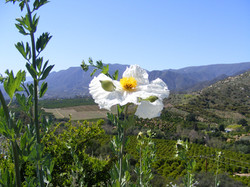Ojai California at Meditation Mount