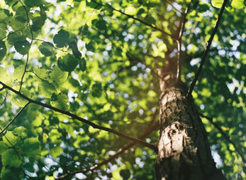 """""""Cherche un arbre et laisse-le t'apprendre le calme"""""""