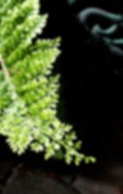 cowichan fern detail.jpg