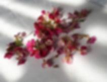 petals.jpg