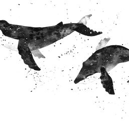 Whales 1
